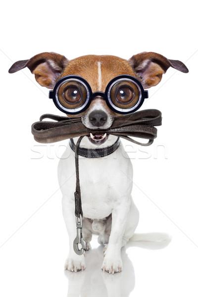 4126612 stupide chien fou muet cuir laisse